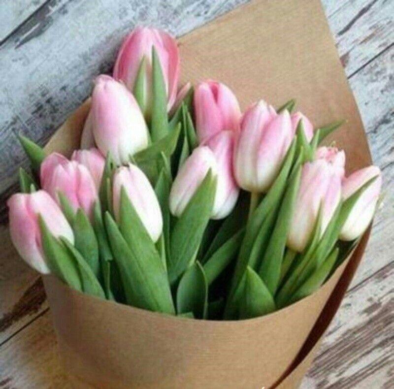 Bellos. Tulipanes holandeses.