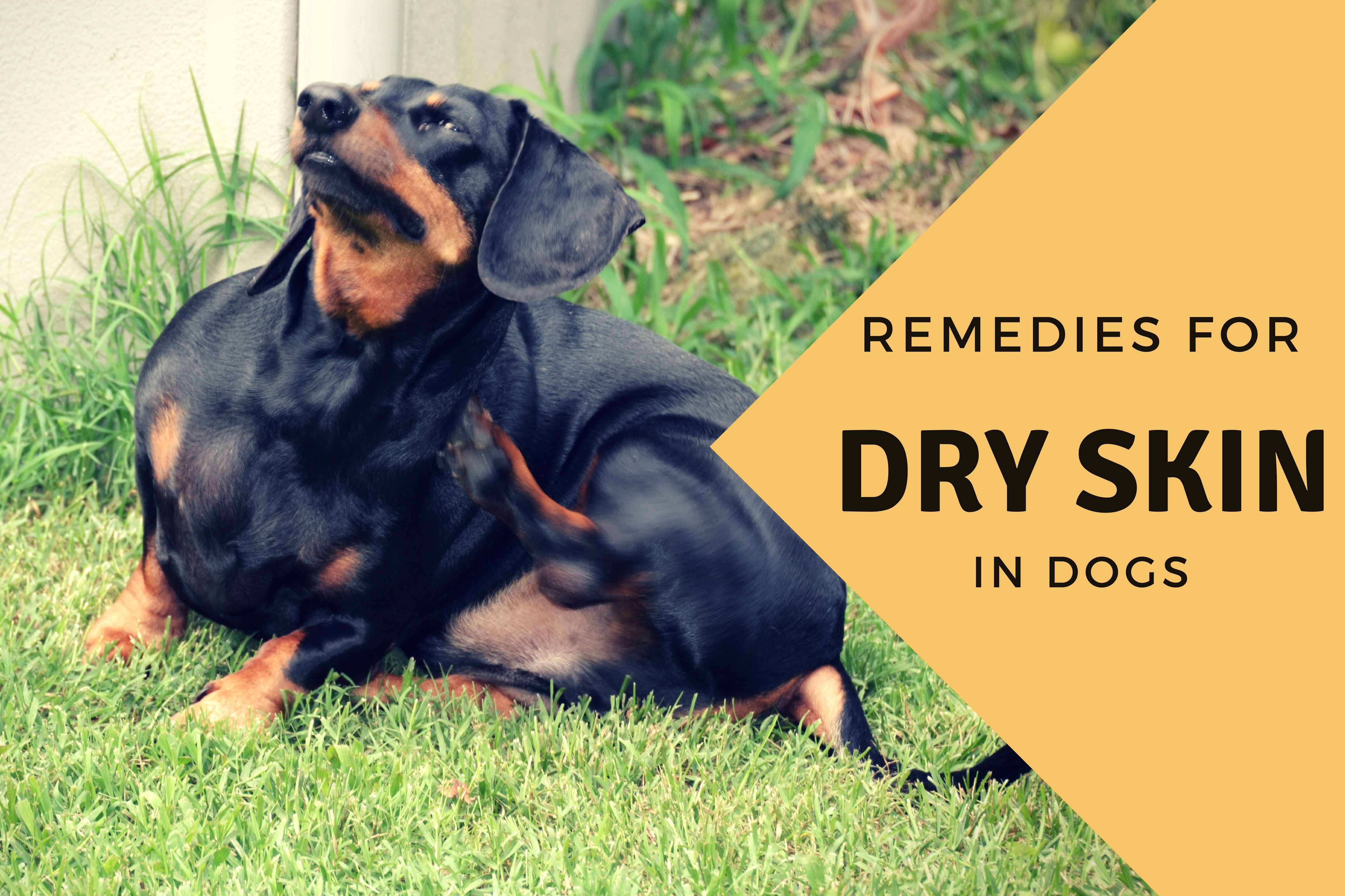 Effective Home Remedies For A Dog With Dry Skin Dry Skin Dog