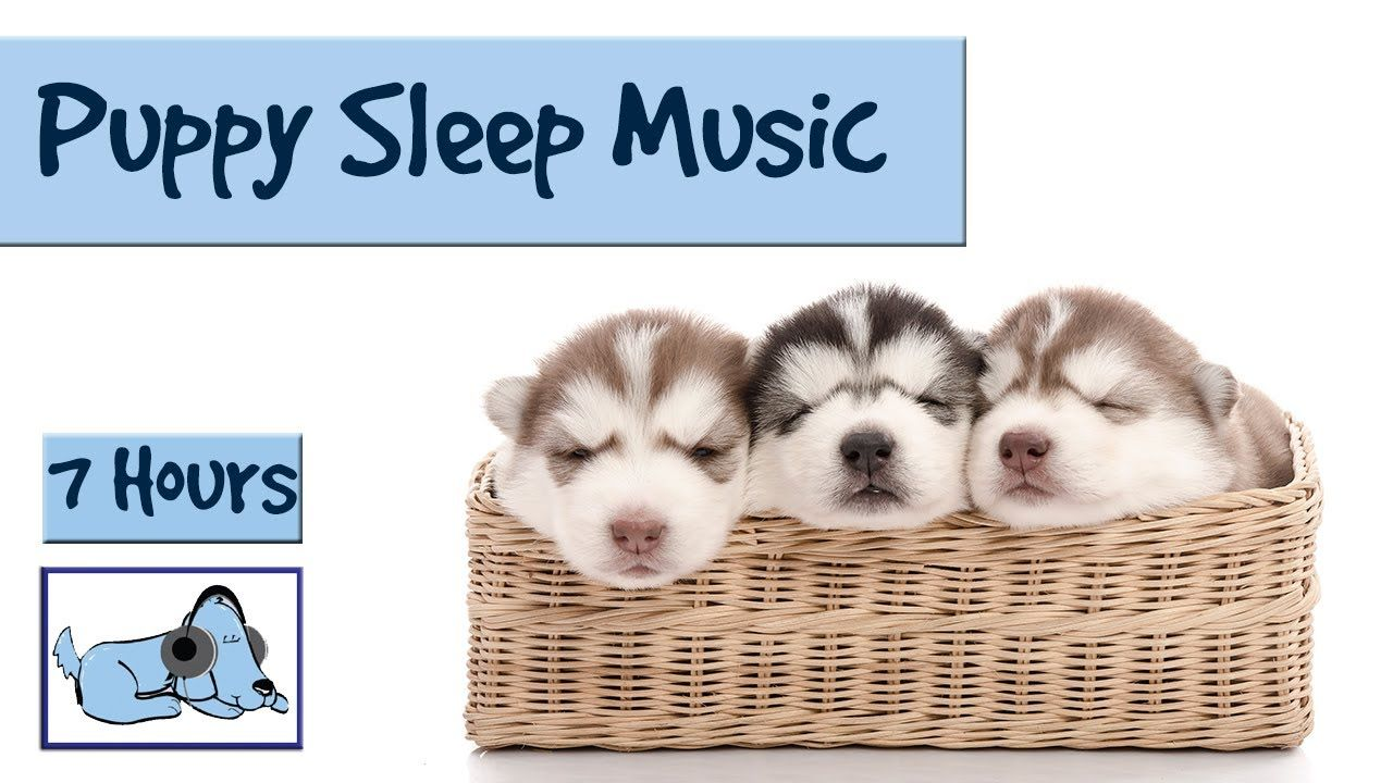Help your Puppy go to Sleep at Night, with this 7 HOUR