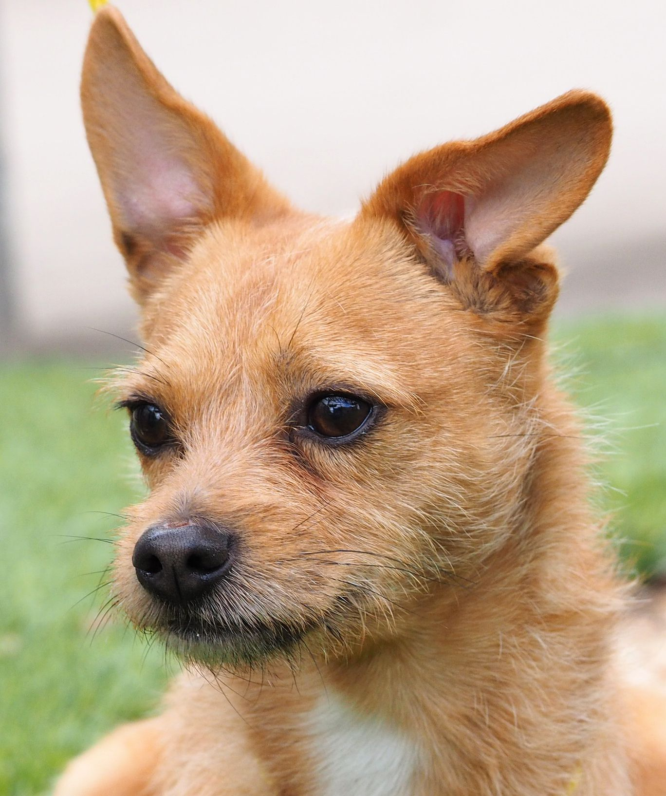Dog adoption, Dogs, Canine