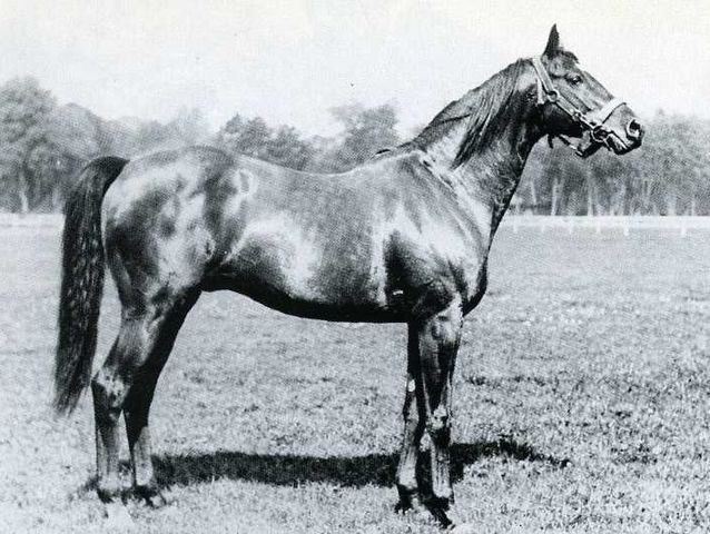 Tourbillon. Bred by Marcel Boussac in France, he became a foundation sire to his successful breeding empire. Tourbillon would sire classic winners and his influence through his sons Djebel in Europe and Ambiorix in the North America was substantial. Here is a link http://thoroughbredancestry.com/?p=756 to read an in depth article on Tourbillon's legacy.