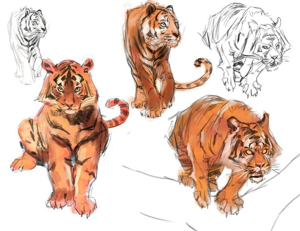 Tigre Sketch: Tiger Studies By Medders On DeviantArt