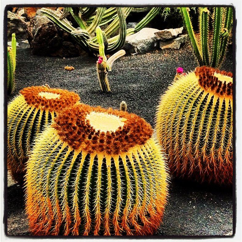 El Jardín de los Cactus
