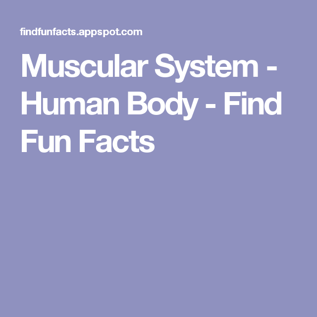 muscular system - human body - find fun facts | anatomy, Muscles