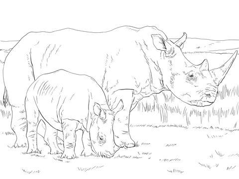 Rinoceronte Blanco Hembra con Cría Dibujo para colorear   animales ...