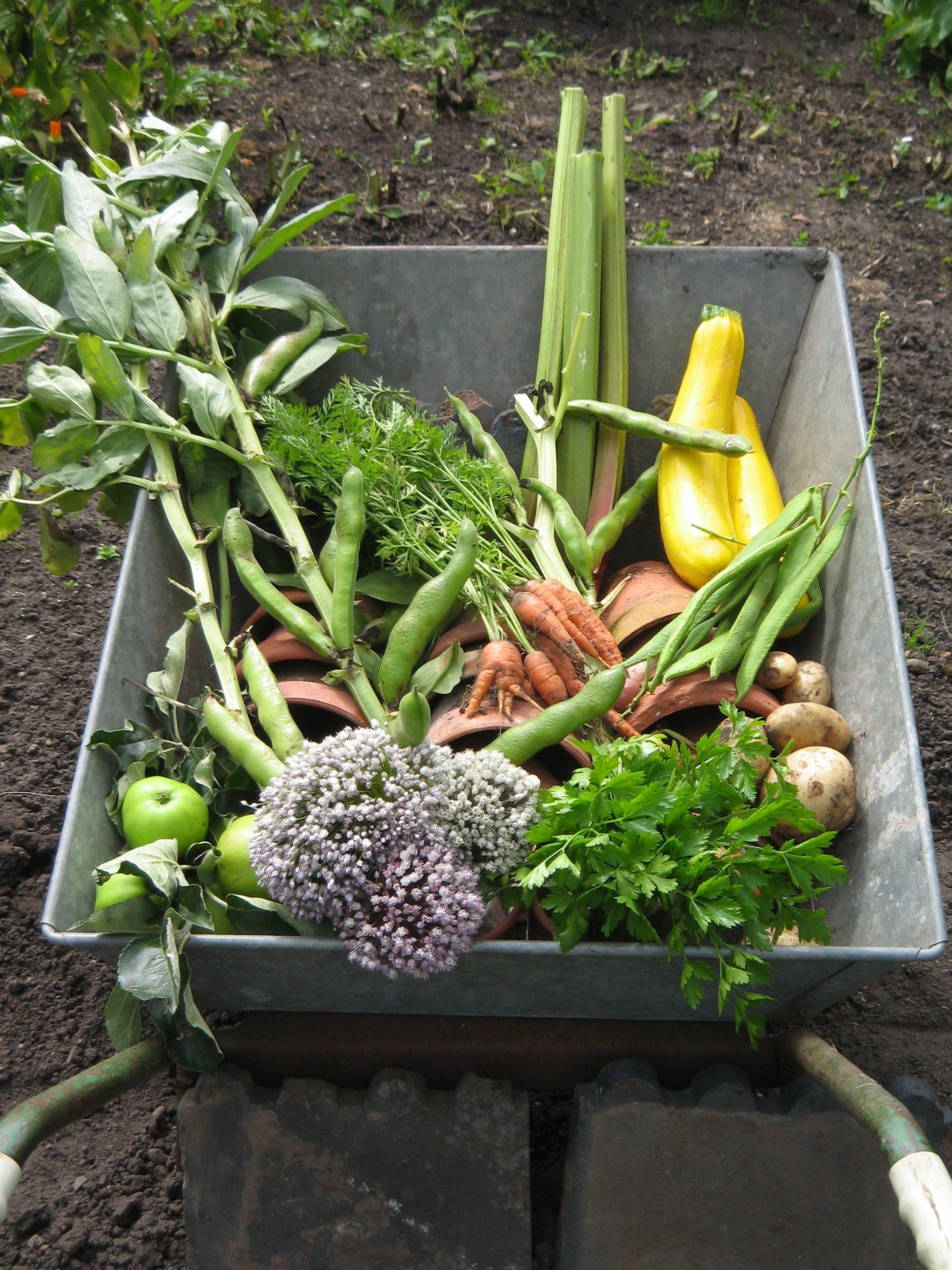 Picturesque A Wheelbarrow Of Produce At Hill Close Gardens Warwick  Hill  With Remarkable A Wheelbarrow Of Produce At Hill Close Gardens Warwick With Captivating Worx Garden Also Bents Garden In Addition Farm And Garden Machinery And Rougemont Gardens As Well As Hand Held Garden Sprayers Additionally Large Black Garden Planters From Itpinterestcom With   Captivating A Wheelbarrow Of Produce At Hill Close Gardens Warwick  Hill  With Picturesque Rougemont Gardens As Well As Hand Held Garden Sprayers Additionally Large Black Garden Planters And Remarkable A Wheelbarrow Of Produce At Hill Close Gardens Warwick Via Itpinterestcom