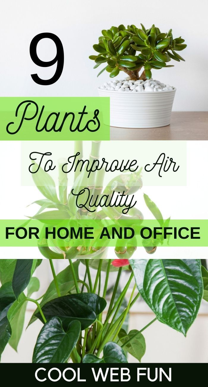 Air Purifying House Plants: 9 Best Air Cleansing Plants for Home