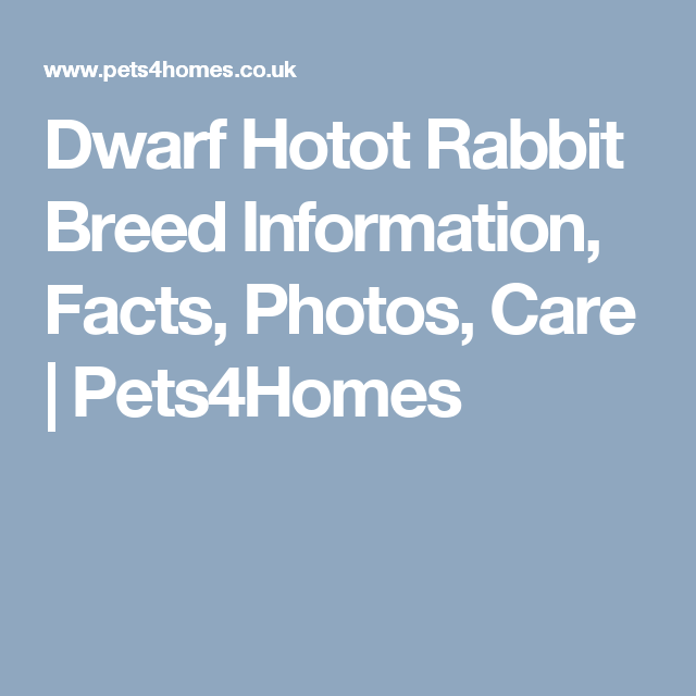 Dwarf Hotot Rabbit Breed Information, Facts, Photos, Care | Pets4Homes