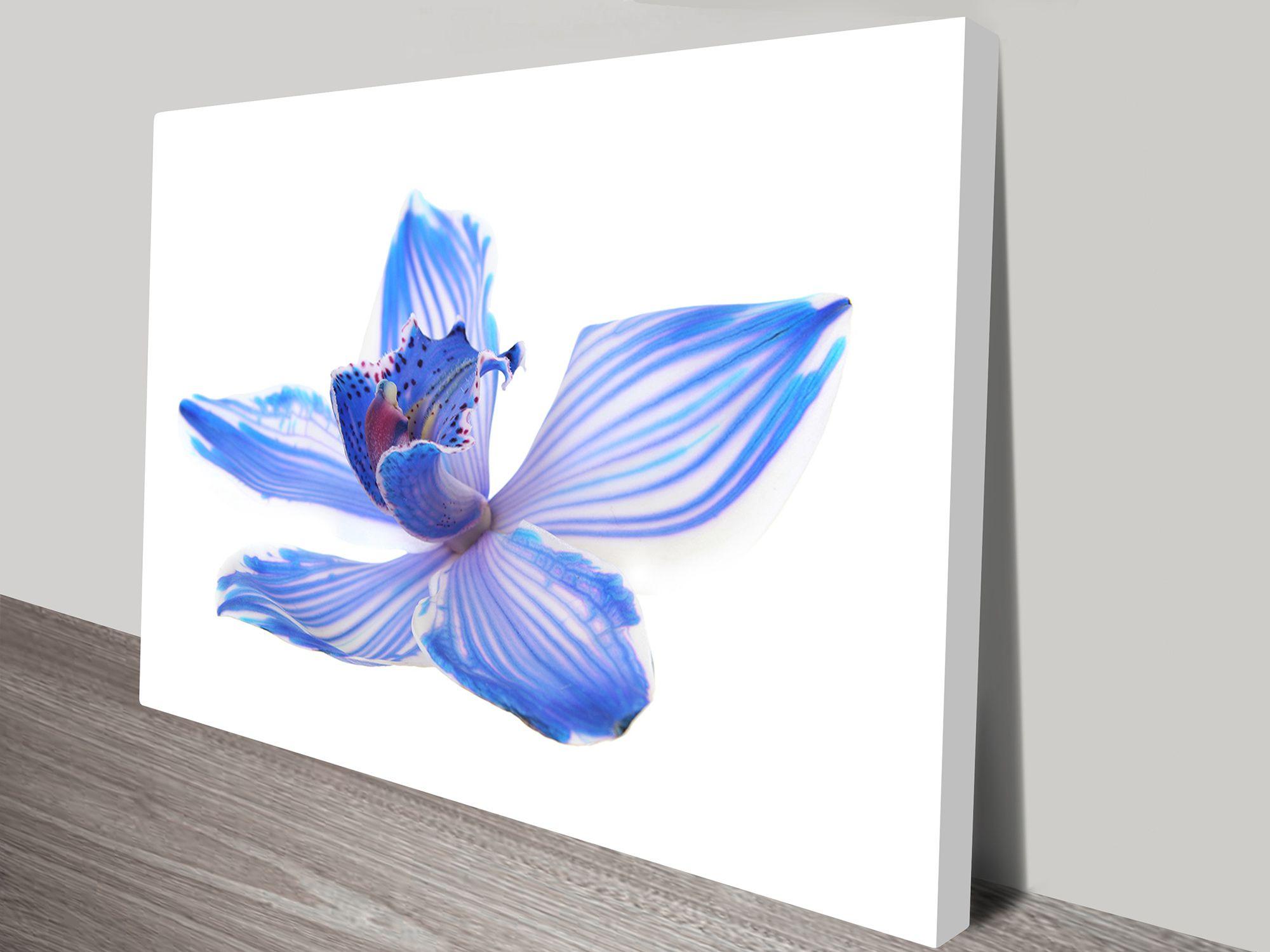Blueorchid floralart canvasprints bluehorizonprints