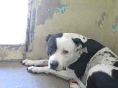 Too old to be loved: Dumped senior dog longs for her family