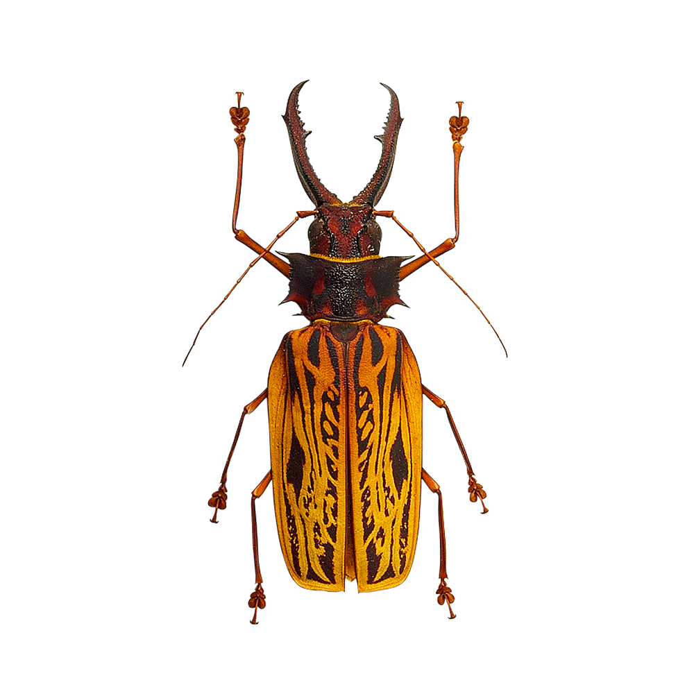 free download high quality beetles insects transparent