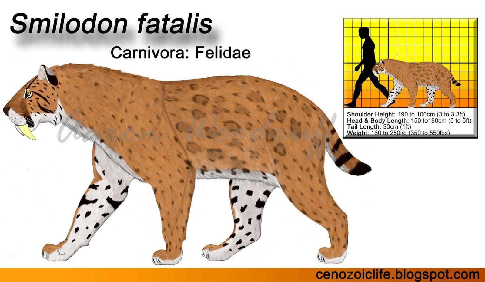Image Result For Smilodon Smilodon Sabertooth Tiger Sabertooth