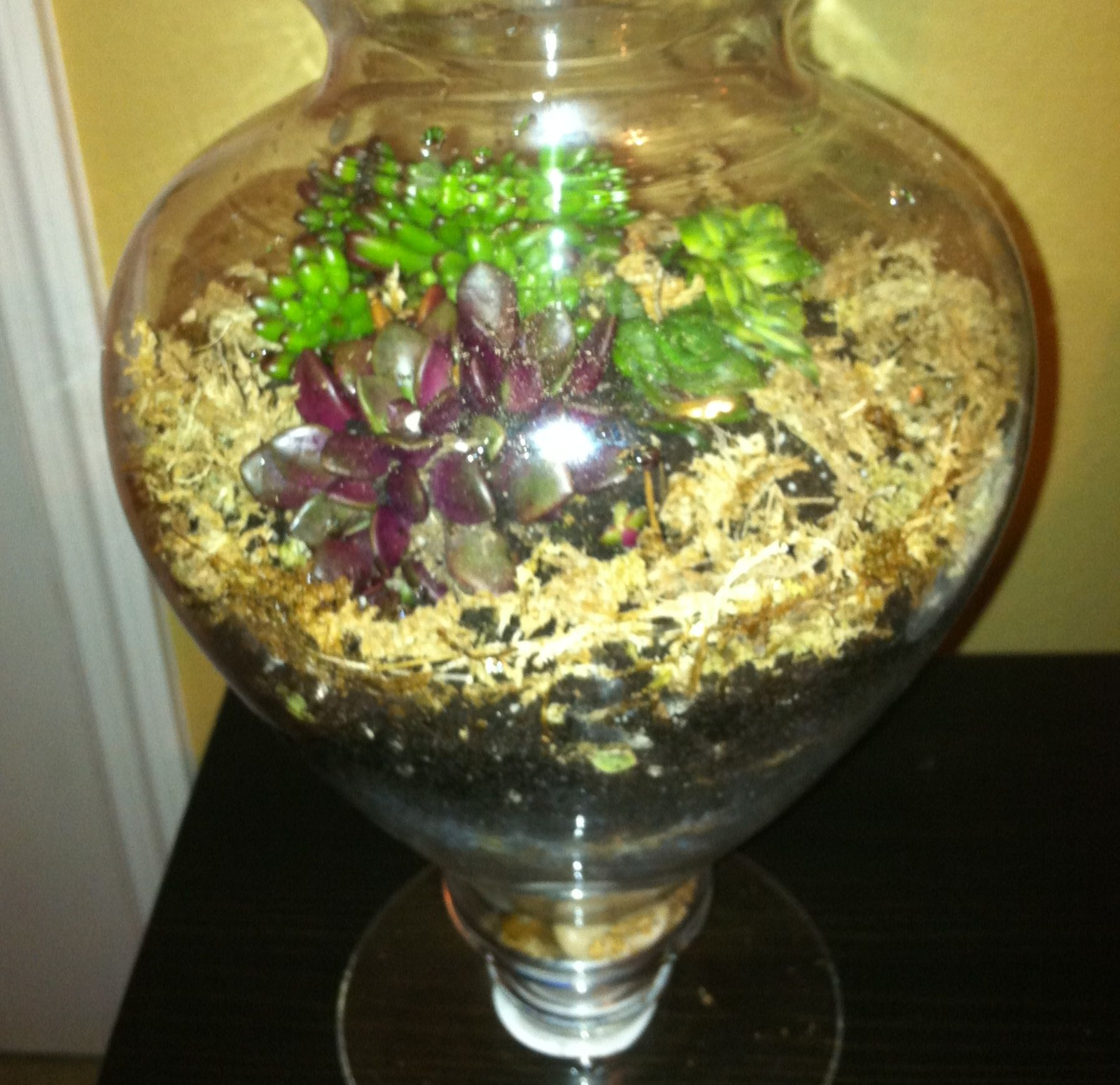 Made this terrarium today! Used an apothecary jar that housed candy at our wedding, stones, Spanish moss, potting soil, and succulents.  =)  Lots of info on terrariums available here: http://www.stormthecastle.com/terrarium/
