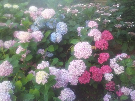 flowers of my garden Photo by Zeynep B. -- National Geographic Your Shot