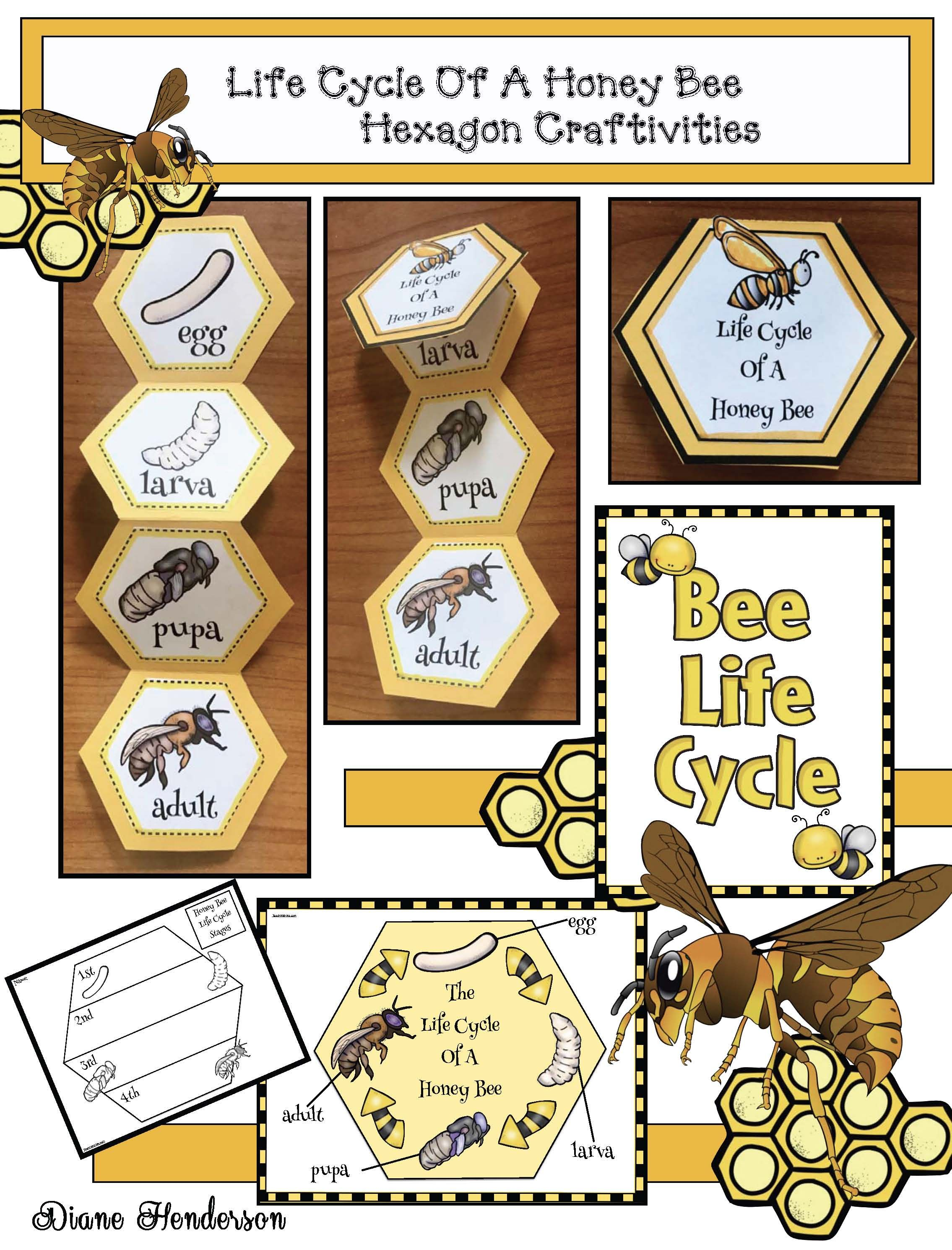 Bee Activities Life Cycle Of A Honey Bee Hexagon Craft