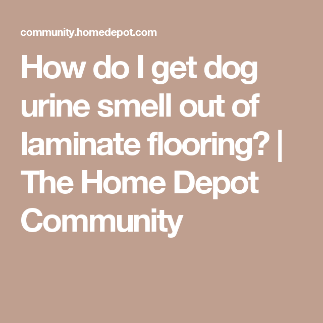 How do I get dog urine smell out of laminate flooring? | The Home ...