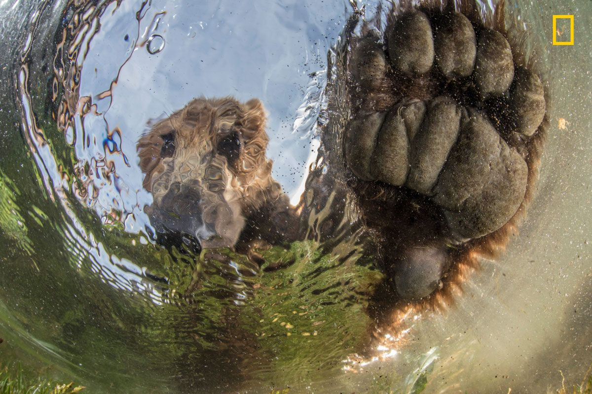 National Geographic Nature Photographer Of The Year 2017 The Grand Prize Winner Will Receive Us 10 000 Publication In National Geographic And A Feature On Na Nature Photographs National Geographic Nature Photography
