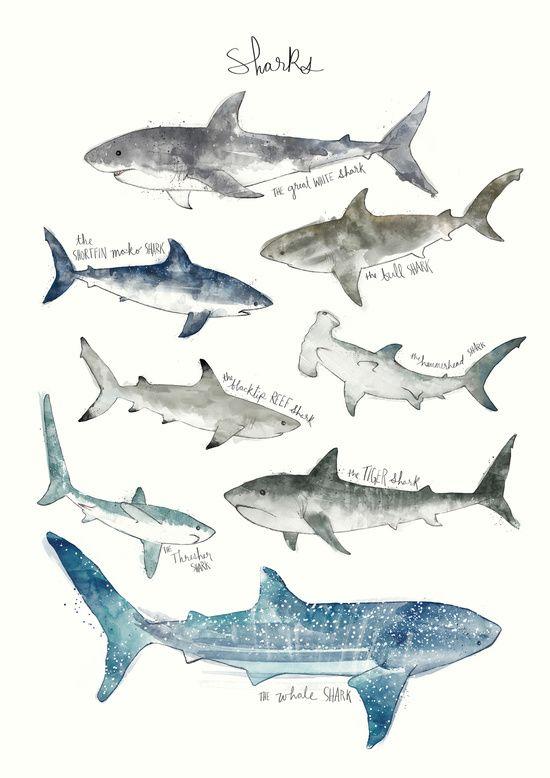 Sharks Art Print. Amy Hamilton.   desenhos   Pinterest   Tiburones ...