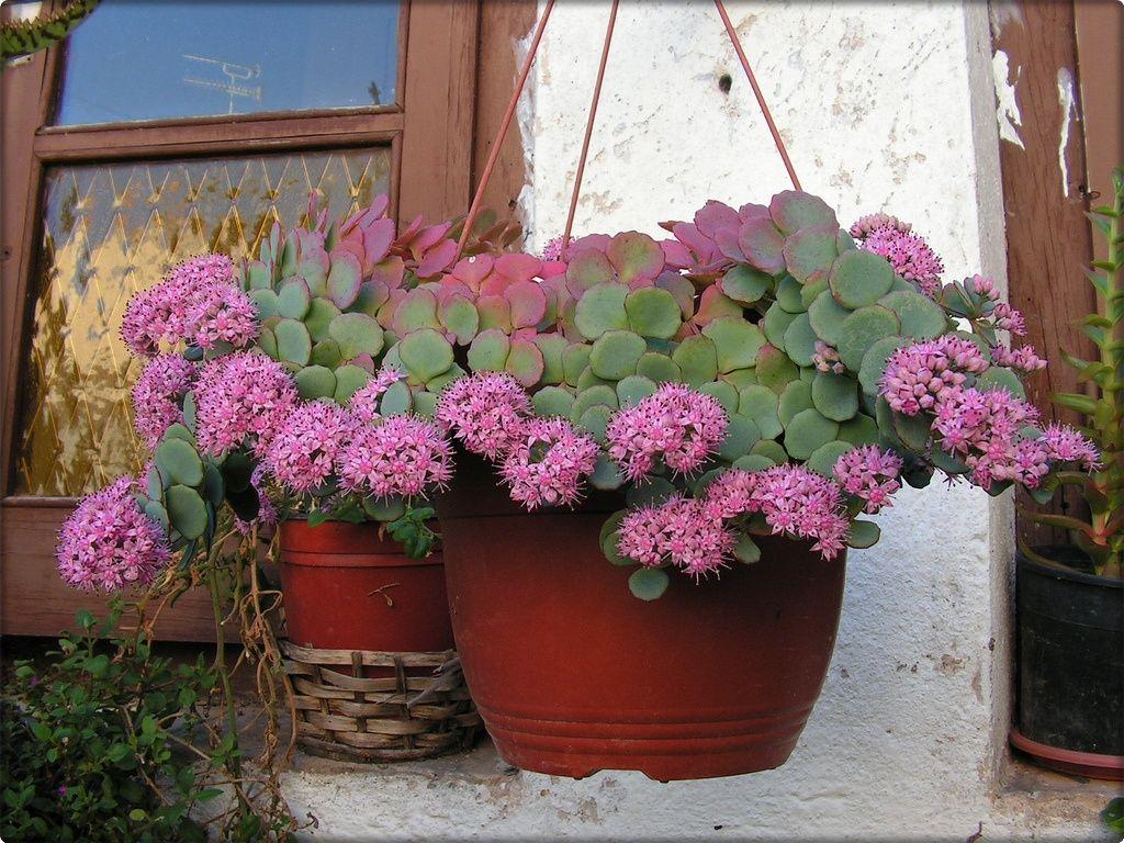 Biljke trajnice lijepog izgleda i nezahtjevne za održavanje - Moj Vrt Cvijeća