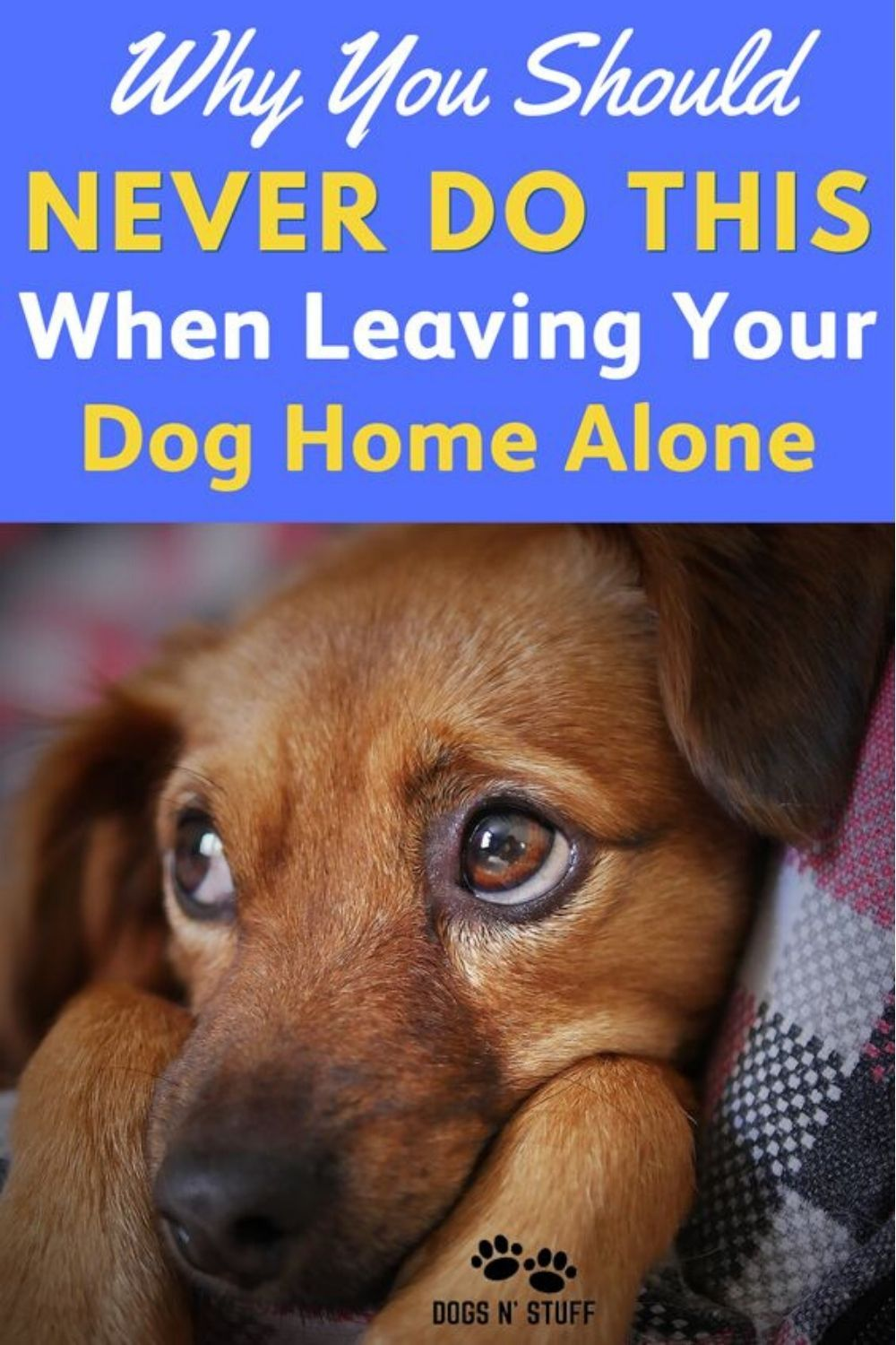 Why You Should NEVER Do This When Leaving Your Dog Home