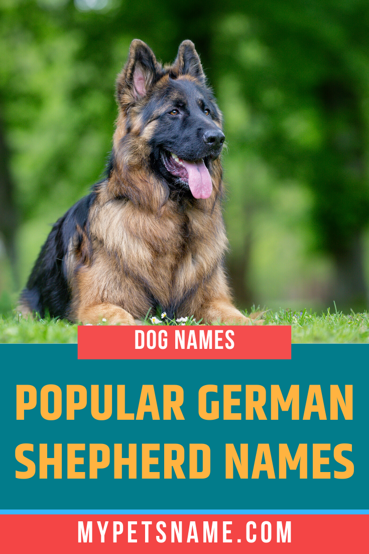 The Most Popular German Shepherd Dog Names Are Often Common And Classic Words Which Showcase German Shepherd Names German Shepherd Long Haired German Shepherd