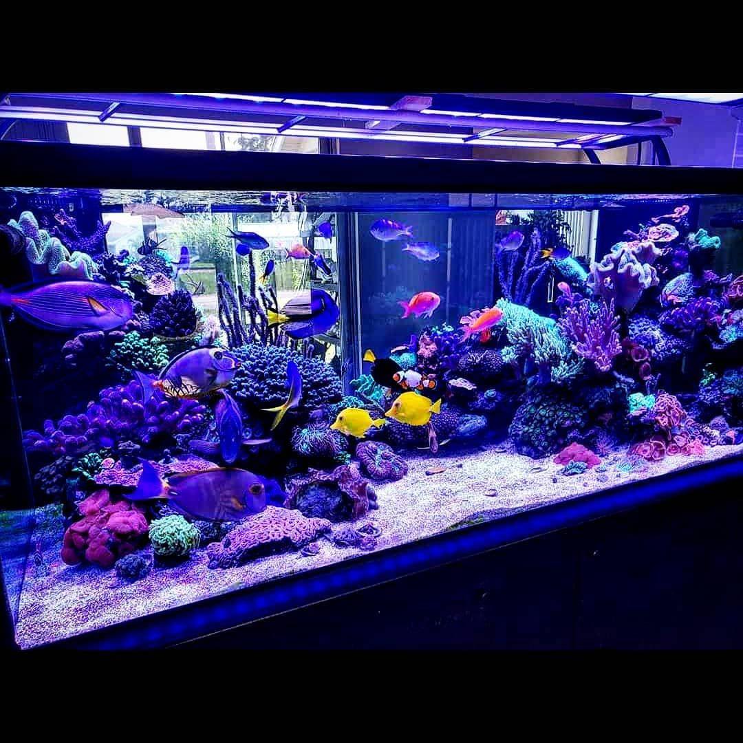 Dalua On Instagram The Reef Of Richard Miller It Exclusively By Illumagic Blaze X 72 Monster Lights Saltwater Aquarium Marine Aquarium Freshwater Plants