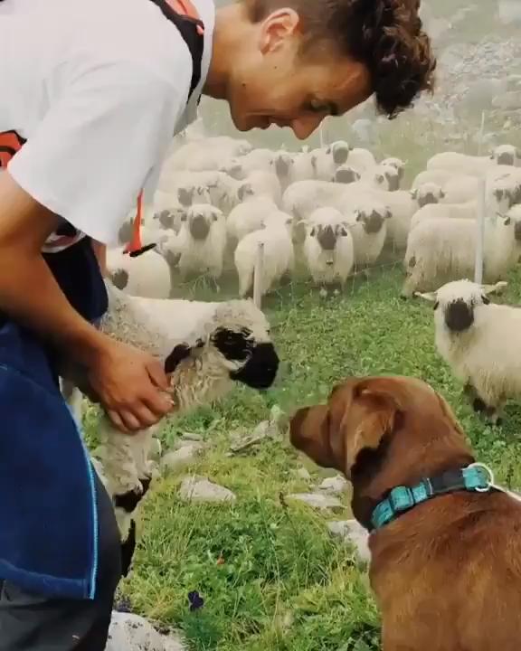 Excelente Sin Cargo Fotos De Perros Popular In 2020 Cute Baby