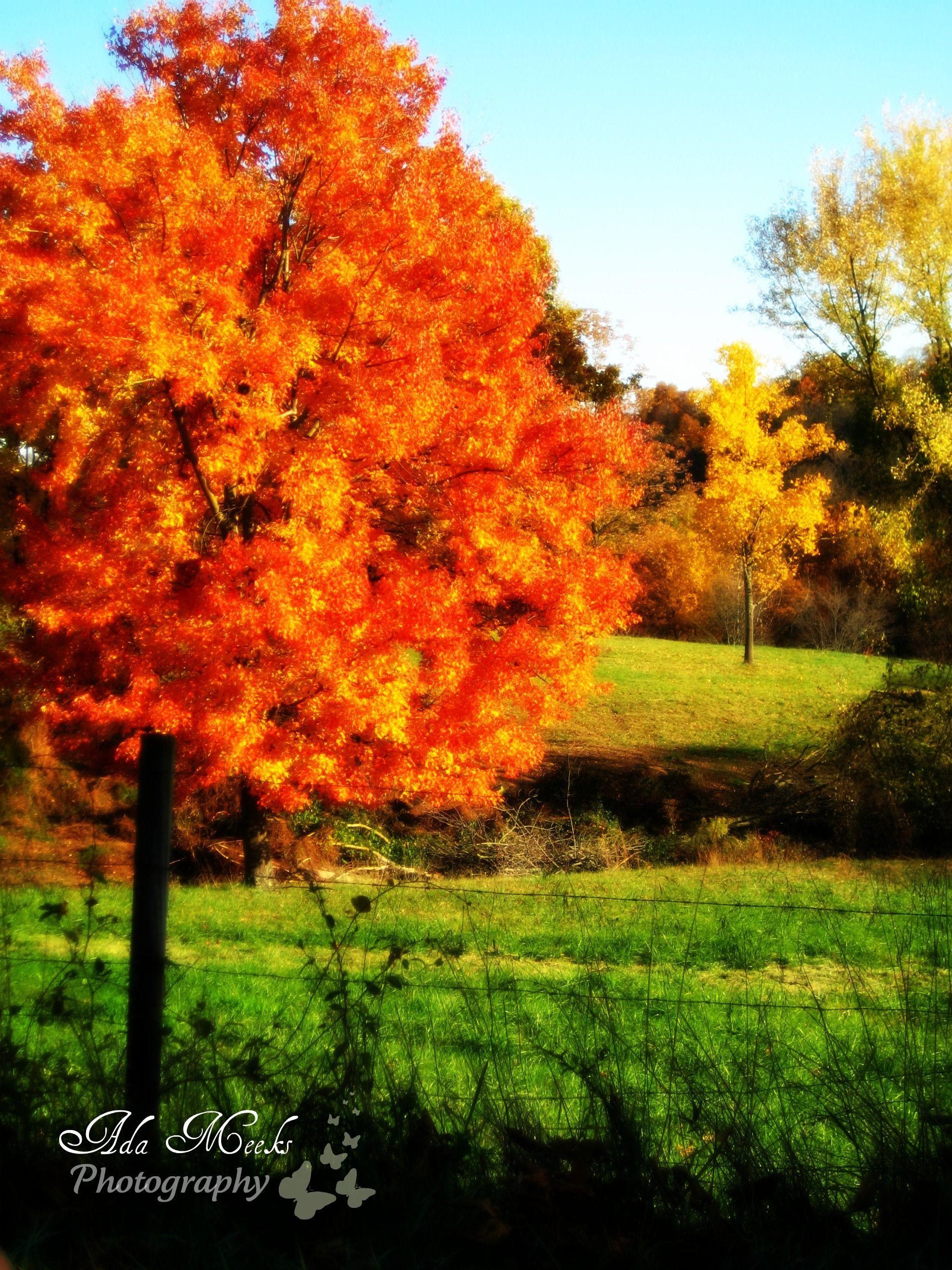 Orange Autumn Tree In West Virginia Autumn Trees Scenic Photos Scenic