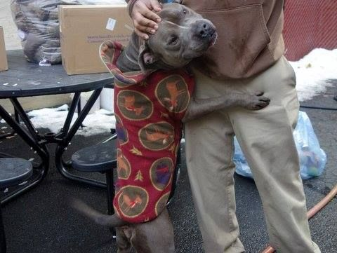 URGENT - Manhattan Center    KING a/k/a SEA HAWK - A0990658   MALE, BLUE / WHITE, PIT BULL MIX, 2 yrs, 1 mo  STRAY - PRE RTO, HOLD FOR RTO Reason STRAY   Intake condition NONE Intake Date 01/30/2014, From NY 10473, DueOut Date 02/02/2014 Main thread: https://www.facebook.com/photo.php?fbid=750885611590987&set=a.617938651552351.1073741868.152876678058553&type=3&permPage=1