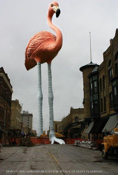 Giant Flamingo Oshkosh Wi Actually I Love This