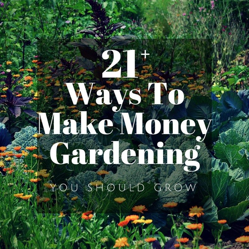 96a7cf4d80e04f6c1c12772867122aba - What Do You Need To Start A Gardening Business