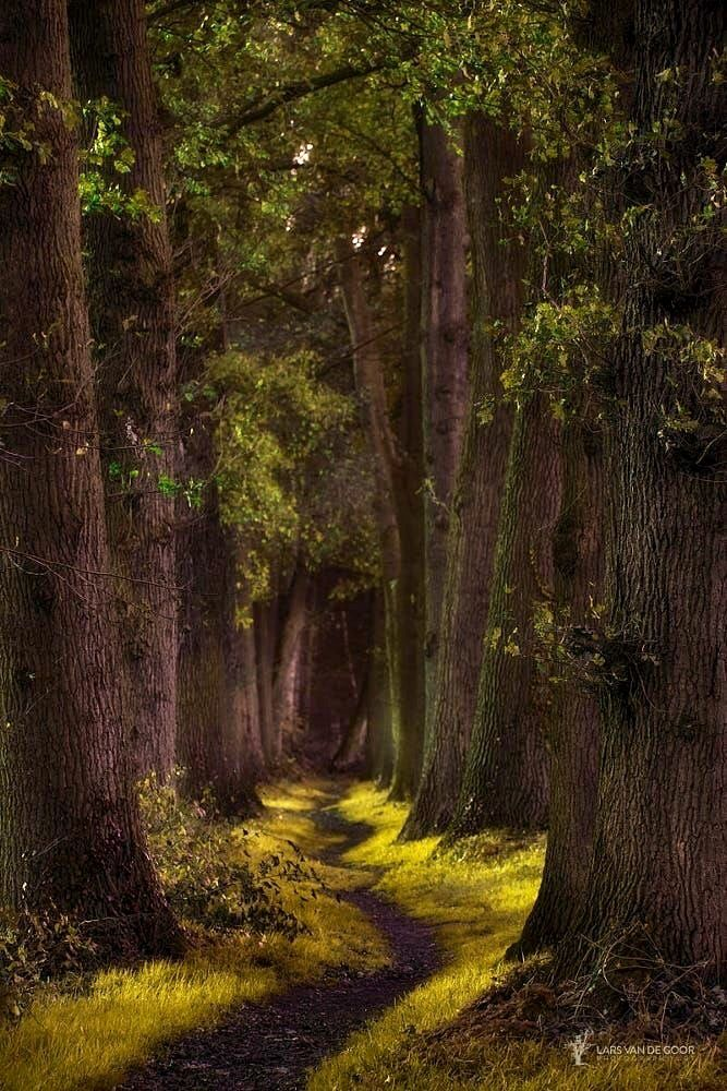 Kronkelpaadje [Winding path] by Lars van de Goor