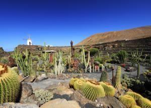Crea un jardín que no necesita muchos riegos o cuidados: Un jardín desértico