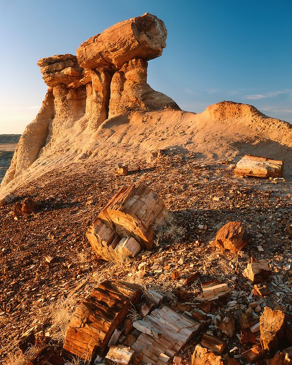 sunrise light on a petrified pedestal log in blue mesa