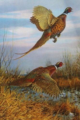 Ring Necked Pheasants by Owen Gromme | eBay | Art: Owen