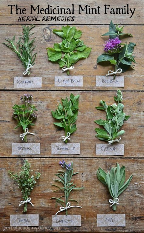 Medicinal mint and herbs