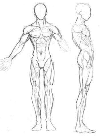 Musculos Manga Pesquisa Google Desenhos Corpo Ilustracao