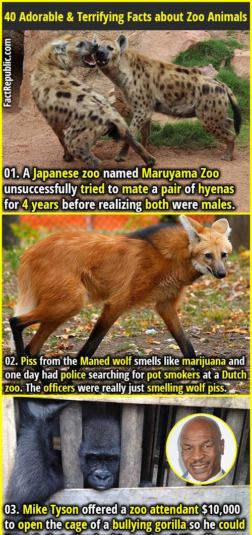 40 Adorable & Terrifying Facts about Zoo Animals | Animal ...
