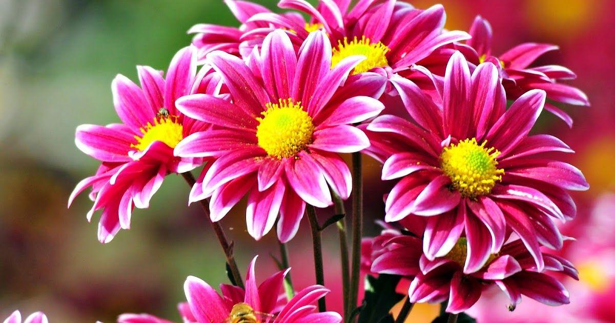 Gambar Bunga Indah Sekali Dengan Pertumbuhan Zaman Yang Semakin Meningkat Serta Canggih Media Sosial Ialah Flores Bonitas Tipos De Flores Imagenes De Flores