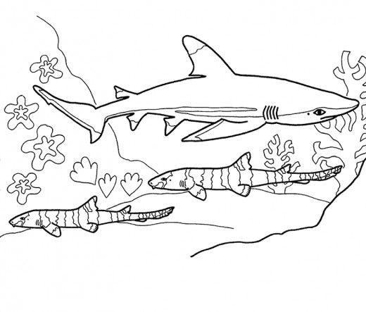 Pictures Of Sharks For Kids To Color In Shark Coloring Pages Shark Pictures Whale Coloring Pages