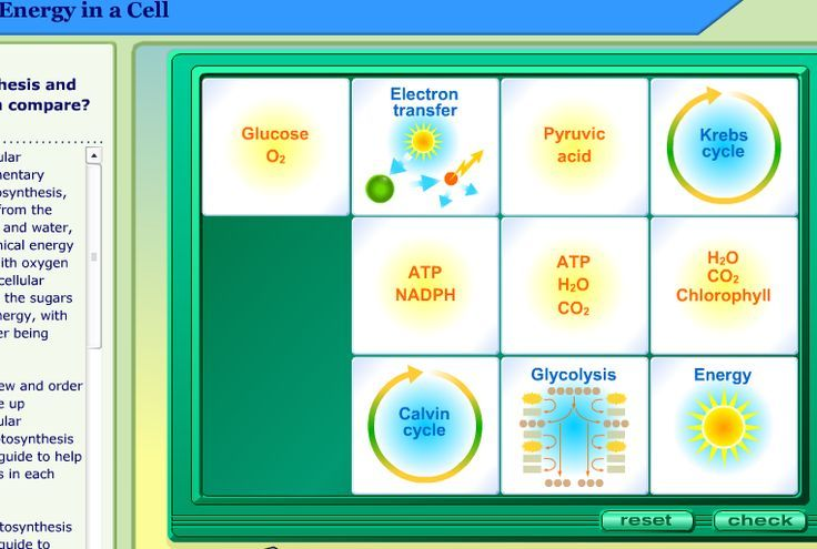 Cellular Respiration Lab for your biology classroom Science for - new tabla periodica tierras raras
