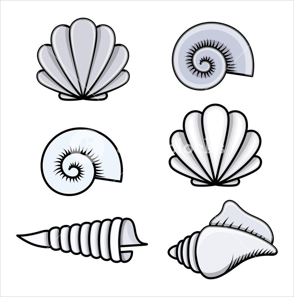 Seashells - Cartoon Vector Illustration | Seashell drawing ...