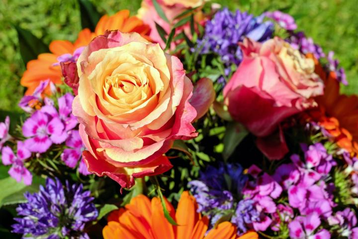 Birth Month Flowers and Their Meanings in 2020 Birth