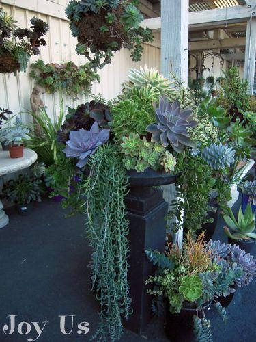 tall urn succulent arrangement succulents pinterest garten garten deko und pflanzen. Black Bedroom Furniture Sets. Home Design Ideas