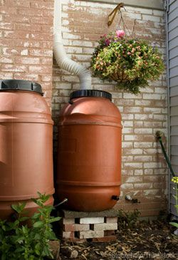By Catching Rainwater Runoff From Your Roof In A Rain Barrel You Can Conserve Natural Resources And S Water Saving Landscape Landscaping Tips Water Collection