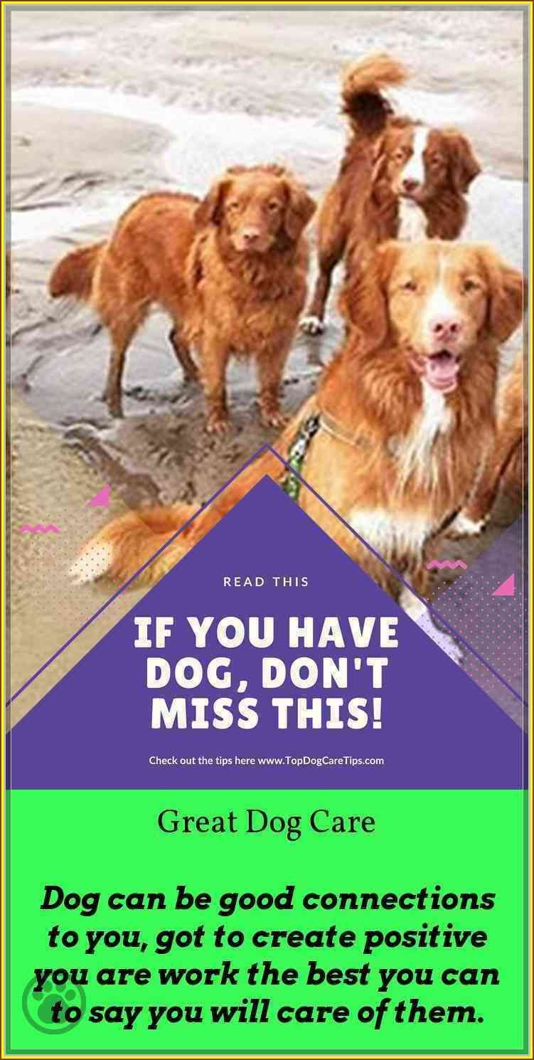 Stop The Headaches, Learn More About Dog Care Dogs, Dog