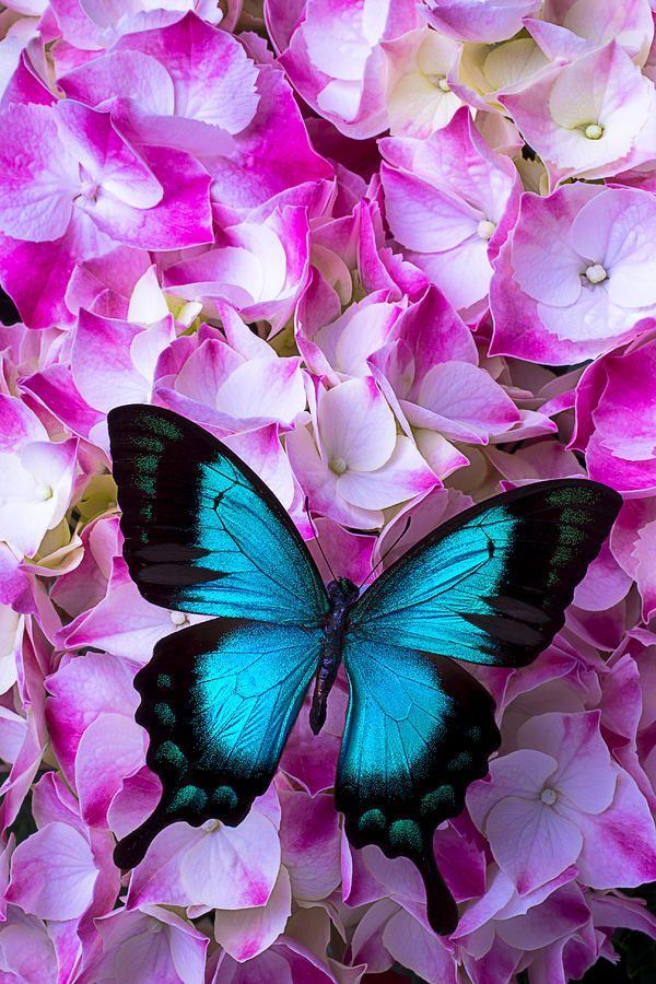 Голубая орхидея гей видео фото 530-907