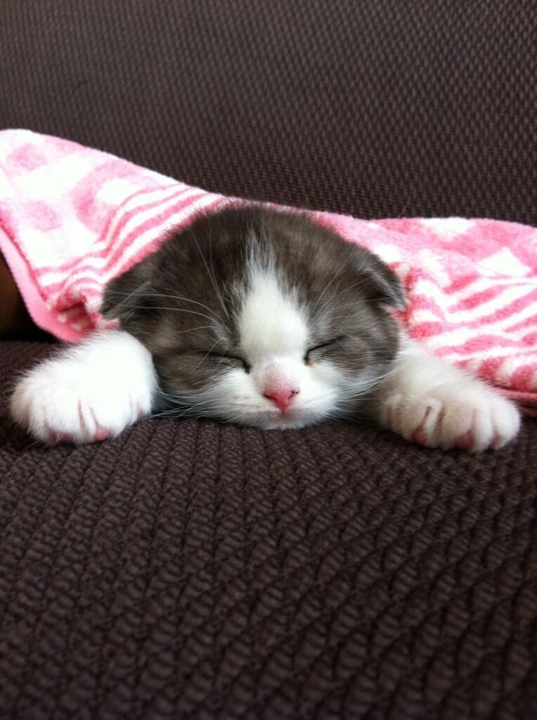 """@Animalshoots: pic.twitter.com/Tv1dkOfph9""#buonanotte"
