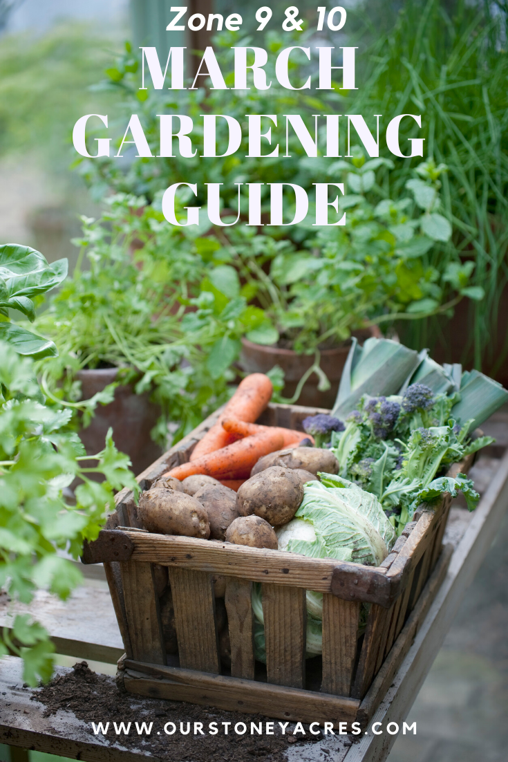 March Planting Guide Zones 9 10 Apartment Vegetable Garden