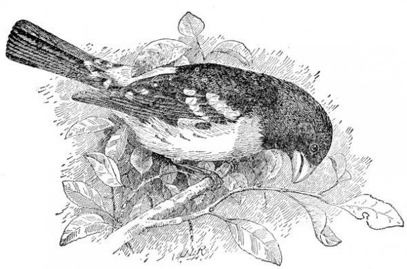 wild bird Coloring Pages   Bird coloring pages, Bird ...
